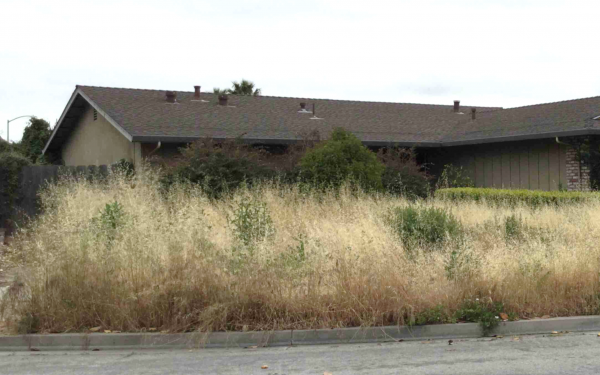 Property with dry, overgrown weeds